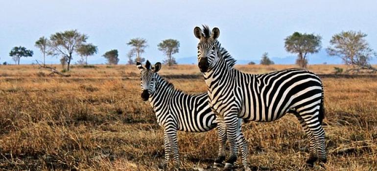 12 days, 11 nights - Sothern Tanzania