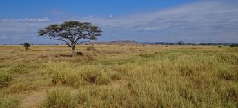 3 days, 2 nights - Serengeti Fly in