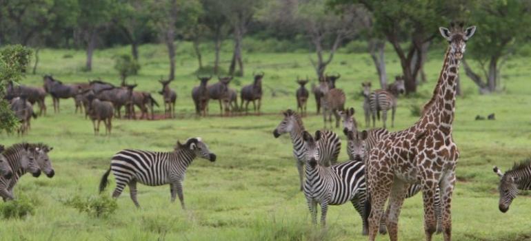 12 days, 11 nights -Selous Luxury Safari and Zanzibar