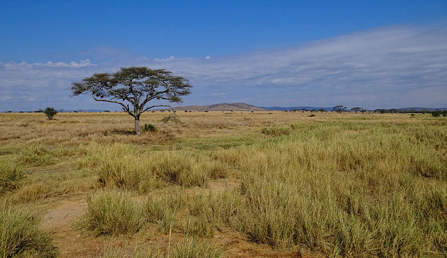 640px-Serengeti-Landscape-2012